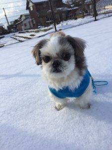 犬は雪の上でかたまる?