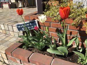 栄和の花壇も春仕様です