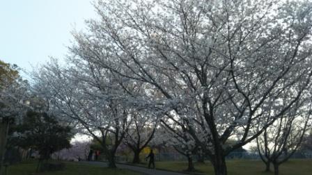 知多市の旭公園