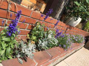 栄和の花壇
