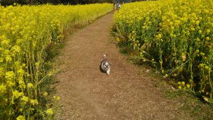 花粉から逃れて。