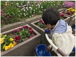 たんぽぽ、菜の花、水仙が咲いていました